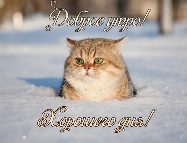 Доброе утро с пятницей картинки позитивные зимние отворот сложить