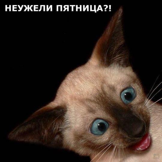 """Картинки прикольные """"С пятницей!"""" (40 фото)"""