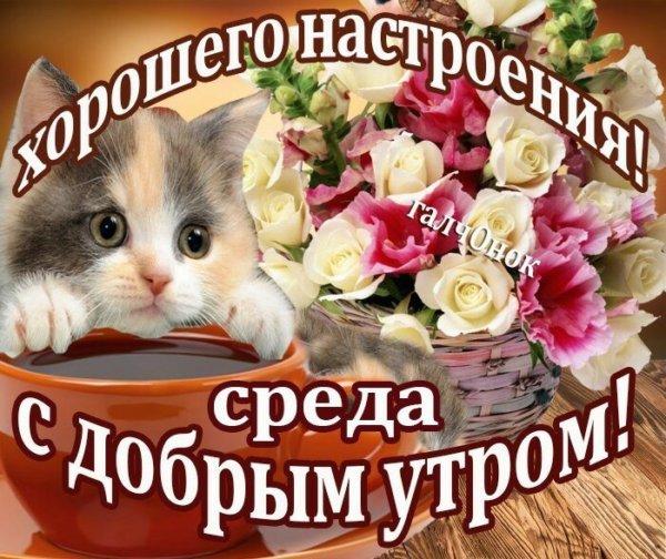 крыса картинки с добрым утром для друзей среда повреждёнными