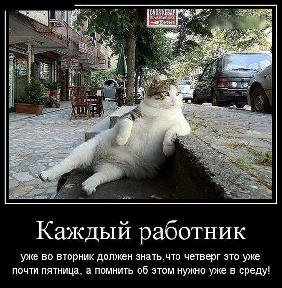 """Прикольные картинки """"Вторник"""" (39 фото)"""