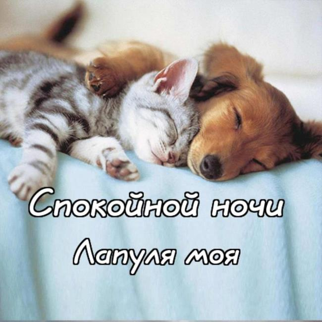 Прикольные картинки «Спокойной ночи любимому мужчине»
